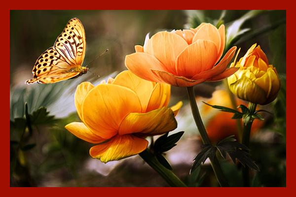 Бабочка над цветком в рамке