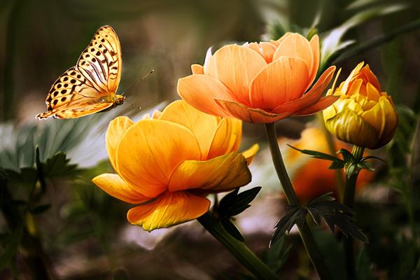 Бабочка над цветком