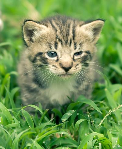 Киска в траве
