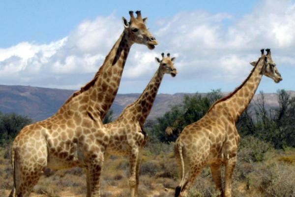 Распродажа во Всемирный день защиты животных