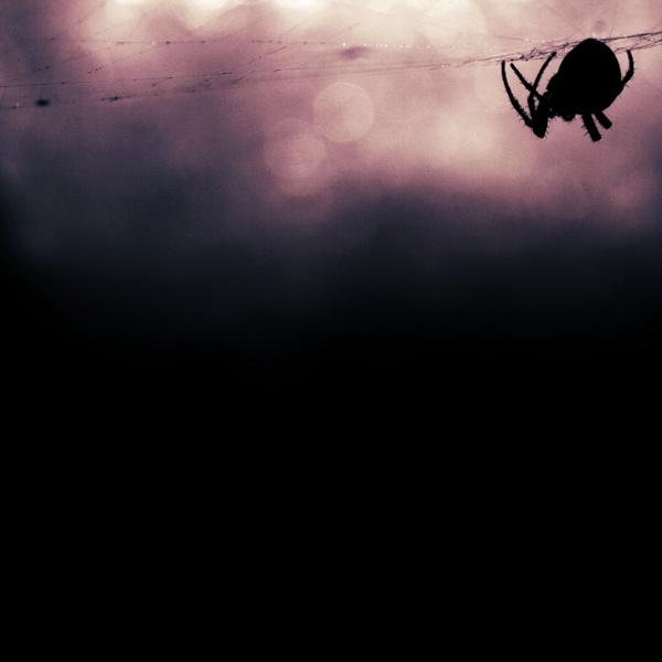Картинка с пауком
