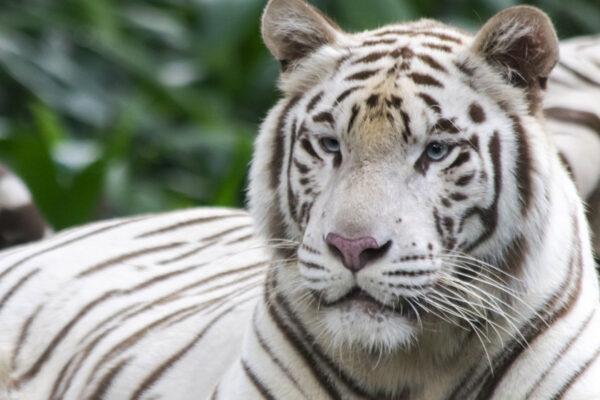 Программы со скидкой во Всемирный день защиты животных